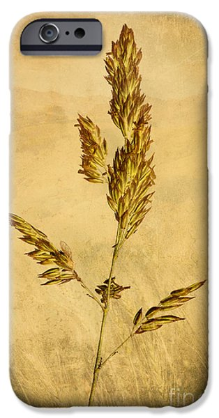 Meadow Grass iPhone Case by John Edwards
