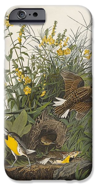 Meadow Drawings iPhone Cases - Meadow Lark iPhone Case by John James Audubon