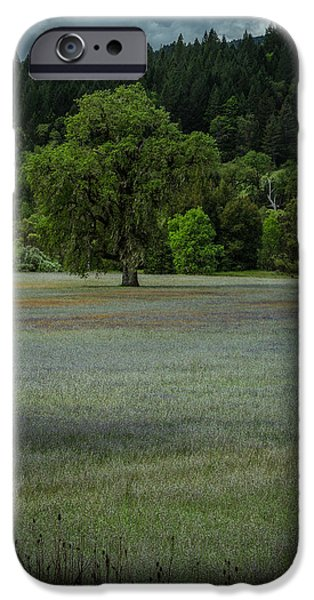 Meadow Pyrography iPhone Cases - Meadow of Flowers iPhone Case by Rick Strobaugh