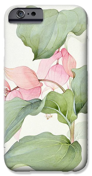 Stigma iPhone Cases - Medinilla magnifica iPhone Case by Sarah Creswell