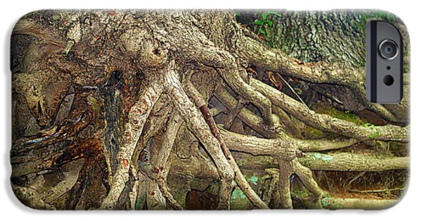 Tree Roots iPhone Cases - Medusa iPhone Case by Cricket Hackmann