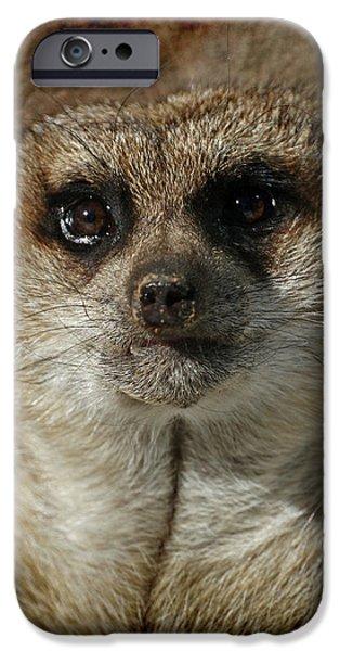 Meerkat 4 iPhone Case by Ernie Echols