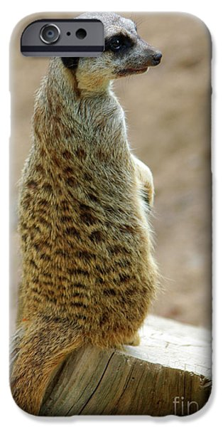 Meerkat Portrait iPhone Case by Carlos Caetano