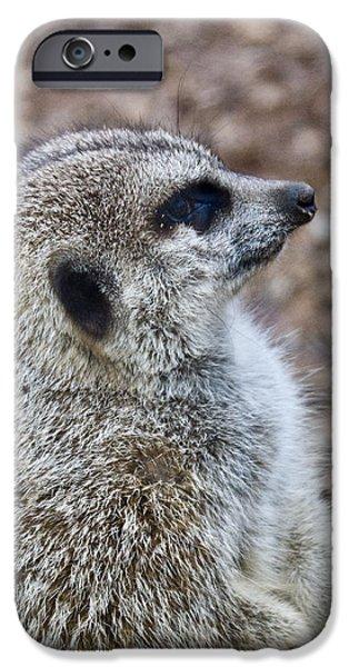 Meerkat Portrait iPhone Case by Douglas Barnett