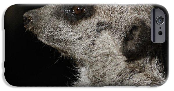 Meerkat iPhone Cases - Meerkat Profile iPhone Case by Ernie Echols