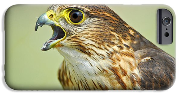 Nature Study iPhone Cases - Merlin Falcon iPhone Case by Timothy Flanigan