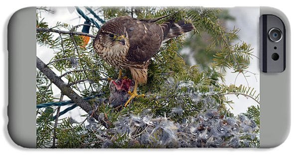 Christmas Greeting iPhone Cases - Merlins feast on the Christmas tree iPhone Case by Asbed Iskedjian