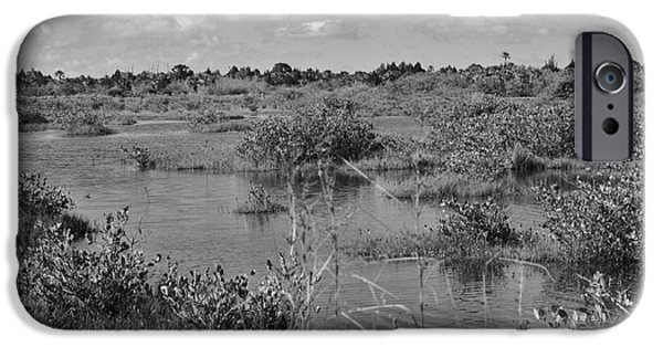 Mangrove Forest iPhone Cases - Merritt Island Wetlands iPhone Case by Chuck  Hicks