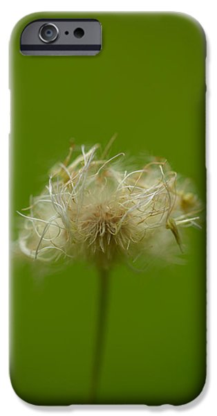 Plant iPhone Cases - Messy Hair iPhone Case by Shane Holsclaw