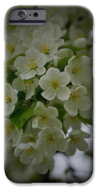 Flora iPhone Cases - Michigan in Spring iPhone Case by Richard Andrews