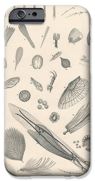 Biological Drawings iPhone Cases - Microscopic Objects iPhone Case by Captn Brown