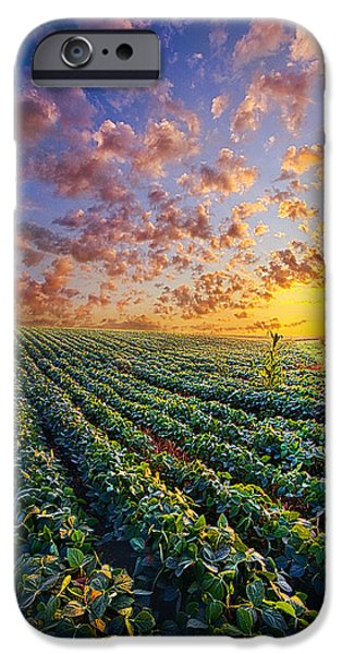 Crops iPhone Cases - Midsummers Dream iPhone Case by Phil Koch