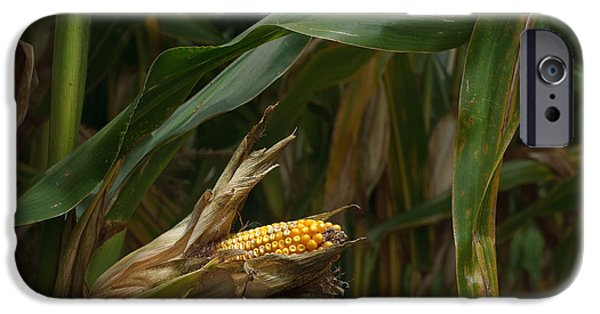 Crops iPhone Cases - Midwest Harvest iPhone Case by Steve Gadomski