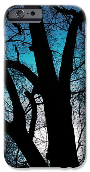 Mighty Oak iPhone Cases - Might Oak 16x20 iPhone Case by Leah Palmer