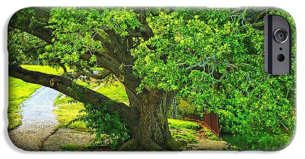 Mighty Oak iPhone Cases - Mighty Oak  iPhone Case by Olahs Photography