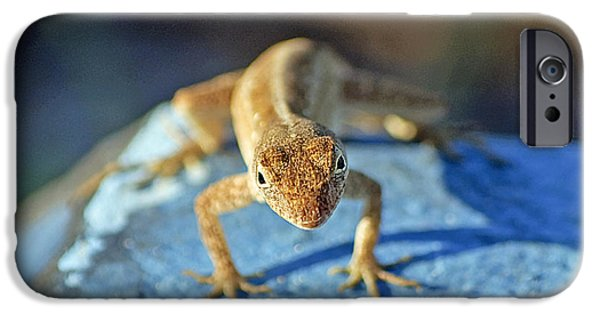 Animals Photographs iPhone Cases - Mini Attitude iPhone Case by Kenneth Albin