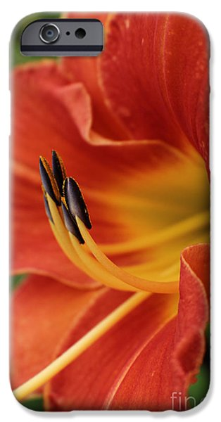 Old Digital Art iPhone Cases - Miss Congeniality  iPhone Case by Ella Kaye Dickey
