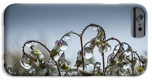 Mist iPhone Cases - Mist on Saxifrage Flowers iPhone Case by Robert Potts