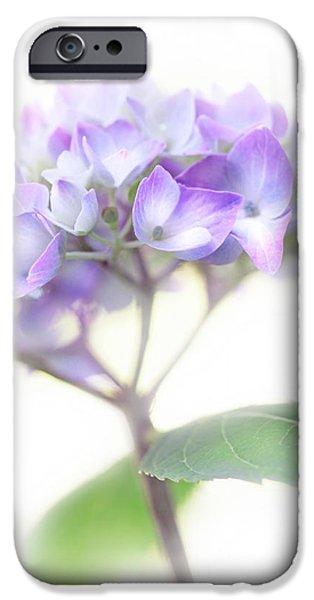 Misty Hydrangea Flower iPhone Case by Jennie Marie Schell