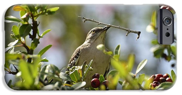 Berry iPhone Cases - Mockingbird Holding Twig iPhone Case by Linda Brody