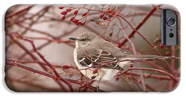 Mockingbird iPhone Cases - Mockingbird In Winter Rose Bush iPhone Case by Max Allen
