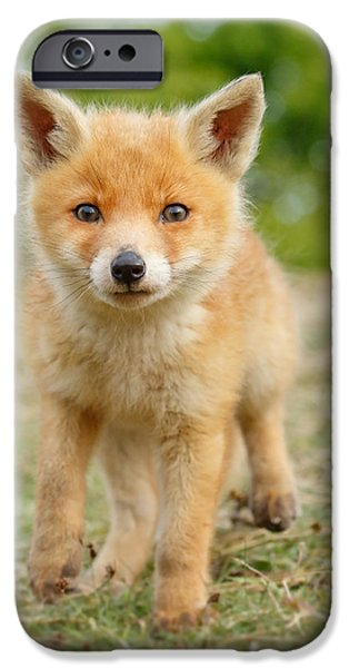 Young iPhone Cases - Moi...? _Fox cub iPhone Case by Roeselien Raimond