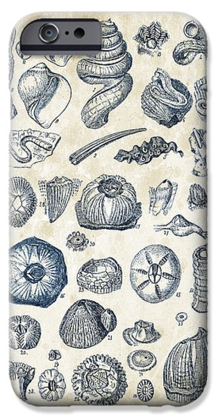 Invertebrates iPhone Cases - Mollusks - 1842 - 01 iPhone Case by Aged Pixel