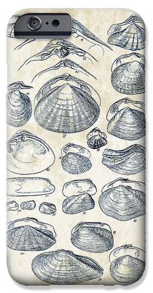 Invertebrates iPhone Cases - Mollusks - 1842 - 04 iPhone Case by Aged Pixel