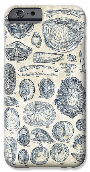 Invertebrates iPhone Cases - Mollusks - 1842 - 12 iPhone Case by Aged Pixel
