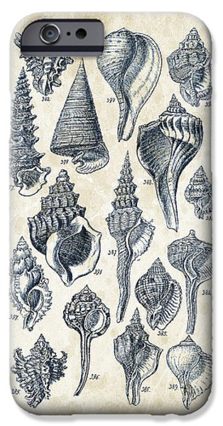Invertebrates iPhone Cases - Mollusks - 1842 - 17 iPhone Case by Aged Pixel