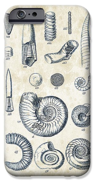 Invertebrates iPhone Cases - Mollusks - 1842 - 22 iPhone Case by Aged Pixel