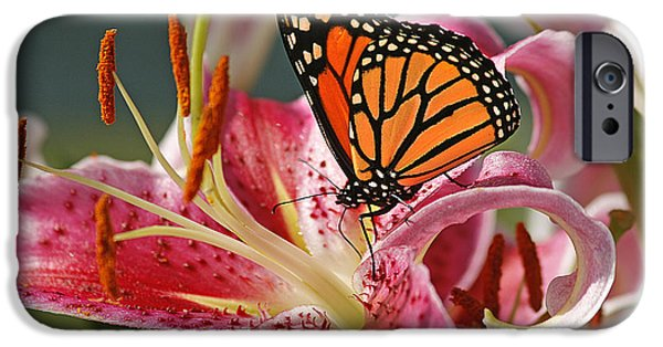 Botanical iPhone Cases - Monarch on a Stargazer Lily iPhone Case by Cindi Ressler