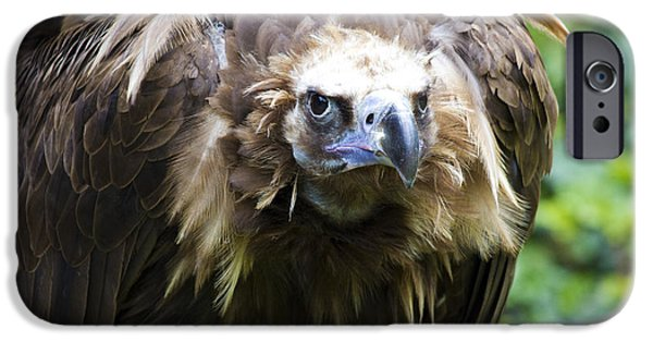 Vulture iPhone Cases - Monk Vulture 3 iPhone Case by Heiko Koehrer-Wagner