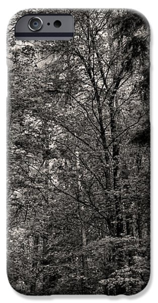 Norway iPhone Cases - Monochrome High Trees iPhone Case by Leif Sohlman