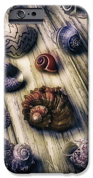 Marine iPhone Cases - Moody Sea Shells  iPhone Case by Garry Gay