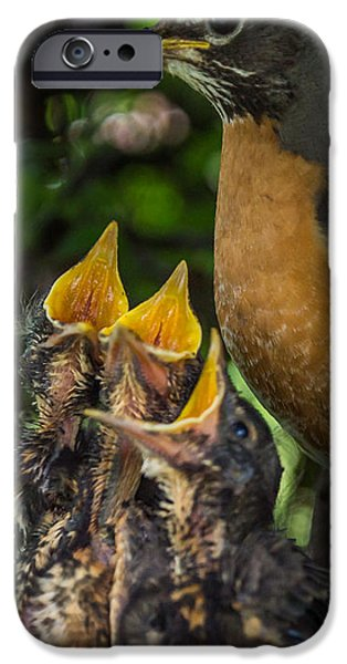 Feeds Chicks iPhone Cases - More Please iPhone Case by Chris Bordeleau