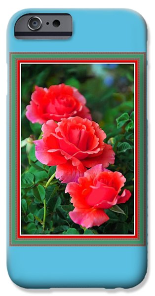 Flower Of Life iPhone Cases - More Roses For Anne Catus 1 no. 5 H B With Decorative Ornate Printed Frame. iPhone Case by Gert J Rheeders