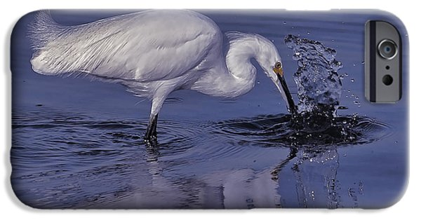 Morning iPhone Cases - Morning Catch iPhone Case by HH Photography of Florida