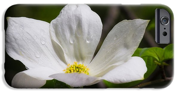 Take Over iPhone Cases - Morning Dogwood iPhone Case by Anthony Bonafede
