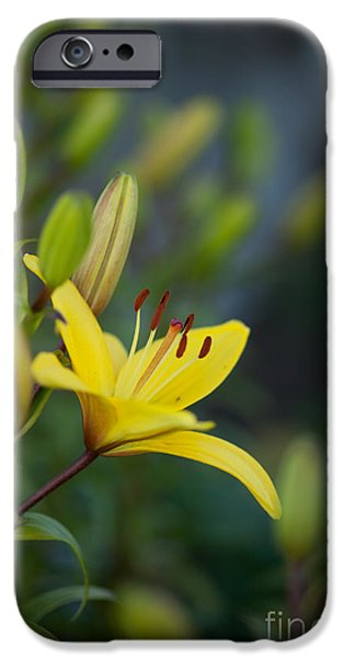 Floral Photographs iPhone Cases - Morning Lily iPhone Case by Mike Reid
