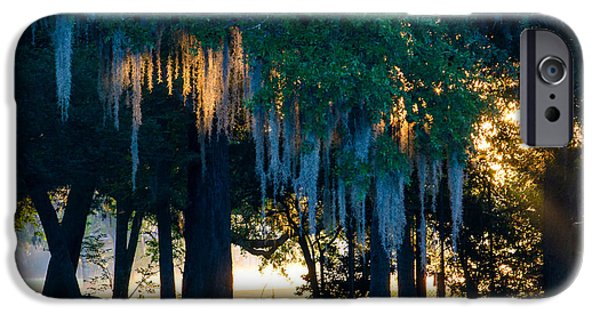 Buy iPhone Cases - Morning Moss iPhone Case by Roger Reeves  and Terrie Heslop