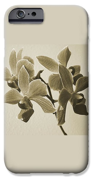 Morning Orchid iPhone Case by Ben and Raisa Gertsberg