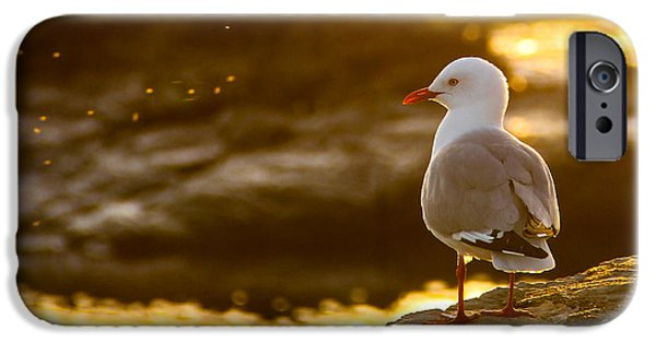 Seagull Pyrography iPhone Cases - Morning iPhone Case by Peteris Vaivars