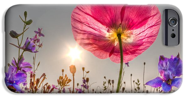 Ga iPhone Cases - Morning Pink iPhone Case by Debra and Dave Vanderlaan