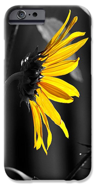 Morning Sun iPhone Case by Clayton Bruster