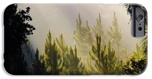 Tree Art Print iPhone Cases - Morning Sunshine iPhone Case by D Hackett