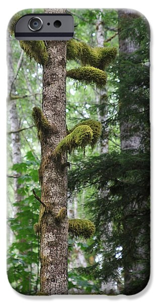 Moss-draped trees on Tiger Mountain WT USA iPhone Case by Christine Till