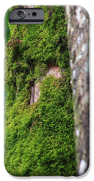 Wall Decor iPhone Cases - Mossy Tree iPhone Case by Lynn L