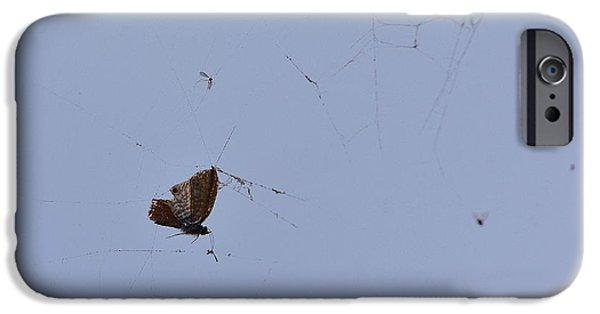 Butterfly Prey iPhone Cases - Moth Caught in Spider Web iPhone Case by Linda Brody