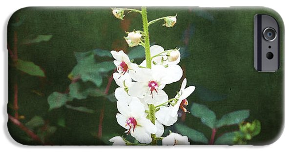 July iPhone Cases - Moth Mullein iPhone Case by Gena Weiser